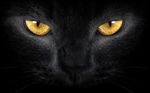 Les yeux jaunes